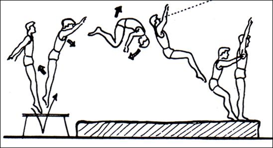 Metodologia de gimnasia mortal adelante for Definicion de gimnasia