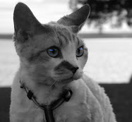 du är min katt