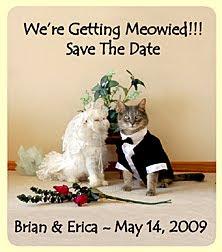 Catsparella planning your dream cat wedding source junglespirit Choice Image