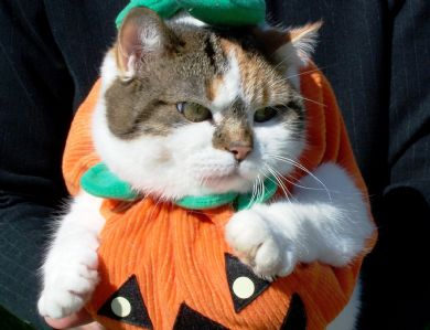 If you liked 20 Fabulous Kitty Witches youu0027re going to love these adorably mad cats dressed up in pumpkin costumes to celebrate Halloween! & Catsparella: 20 Cats in Festive Pumpkin Costumes