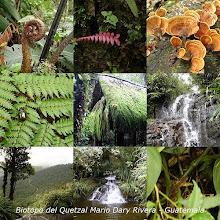 Biotopo del Quetzal,