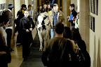 Fringe Promotional Photo: Gene the Cow