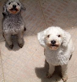 Jojo and Fifi