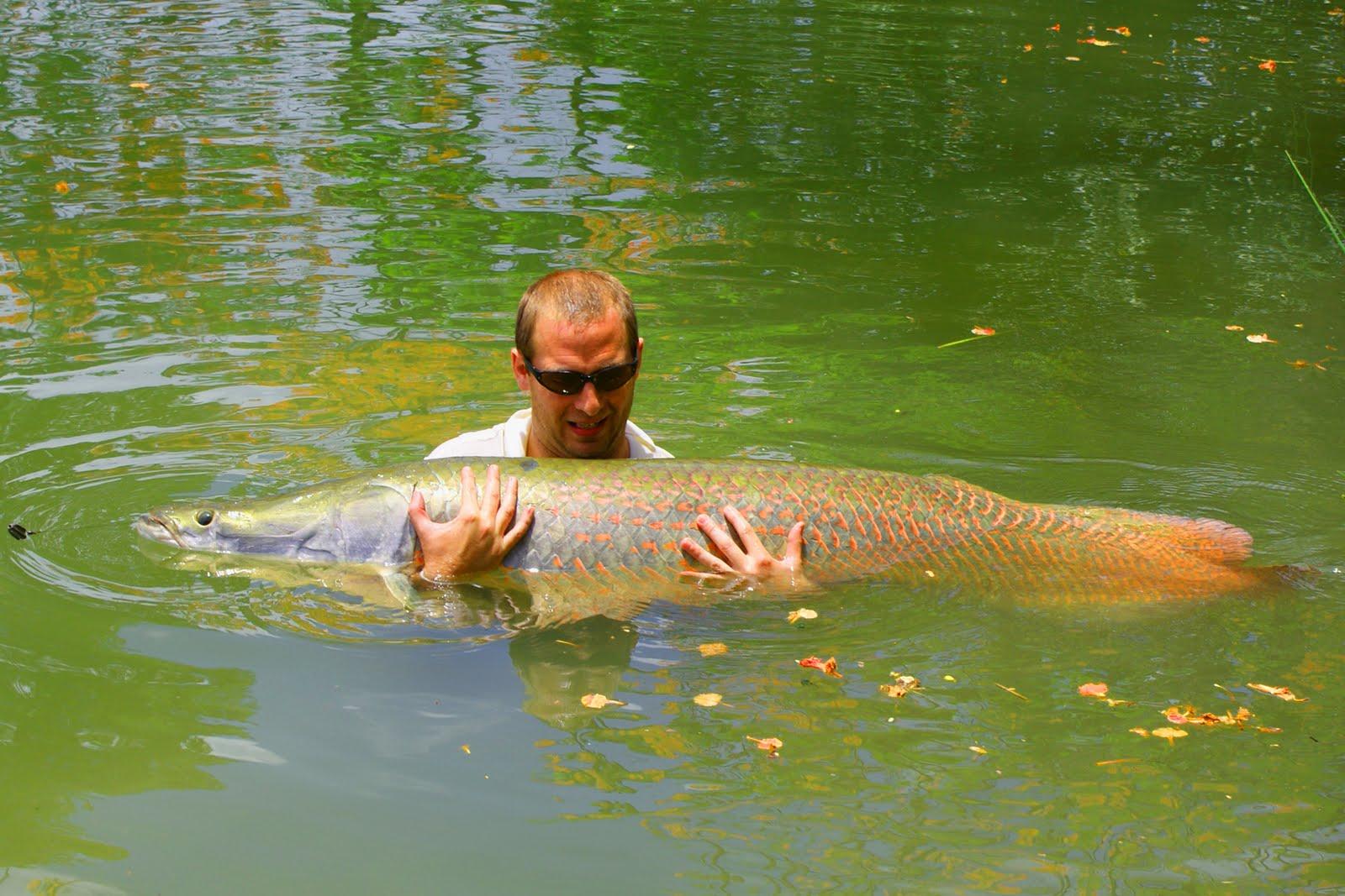 Chiang mai fishing fishing dream lake for arapaima in for Mai mai fish
