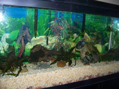 La alegria de aprender for Clases de peces de acuario