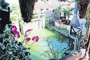 kolam ikan hiasan: taman dan kolam ikan