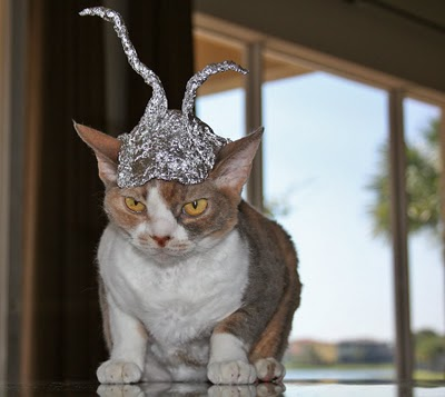Photos Of Cats In Tin Foil Hats