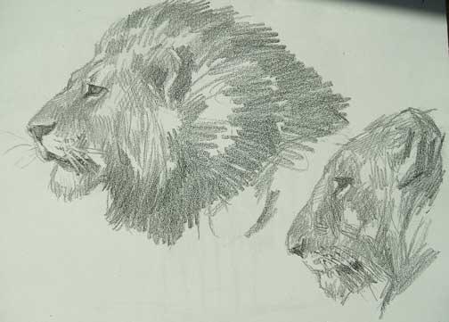 Leones en dibujos a lápiz - Imagui