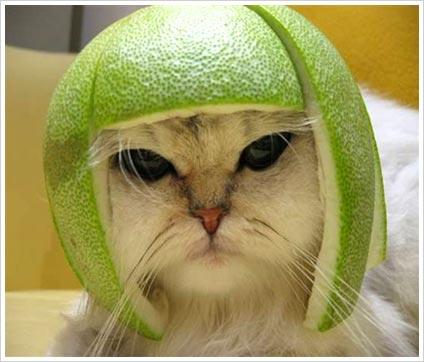 http://1.bp.blogspot.com/_YRU4QreWaYQ/S-C5WOIKilI/AAAAAAAAAAY/tia4tGLwM1w/s1600/funny-cat.jpg