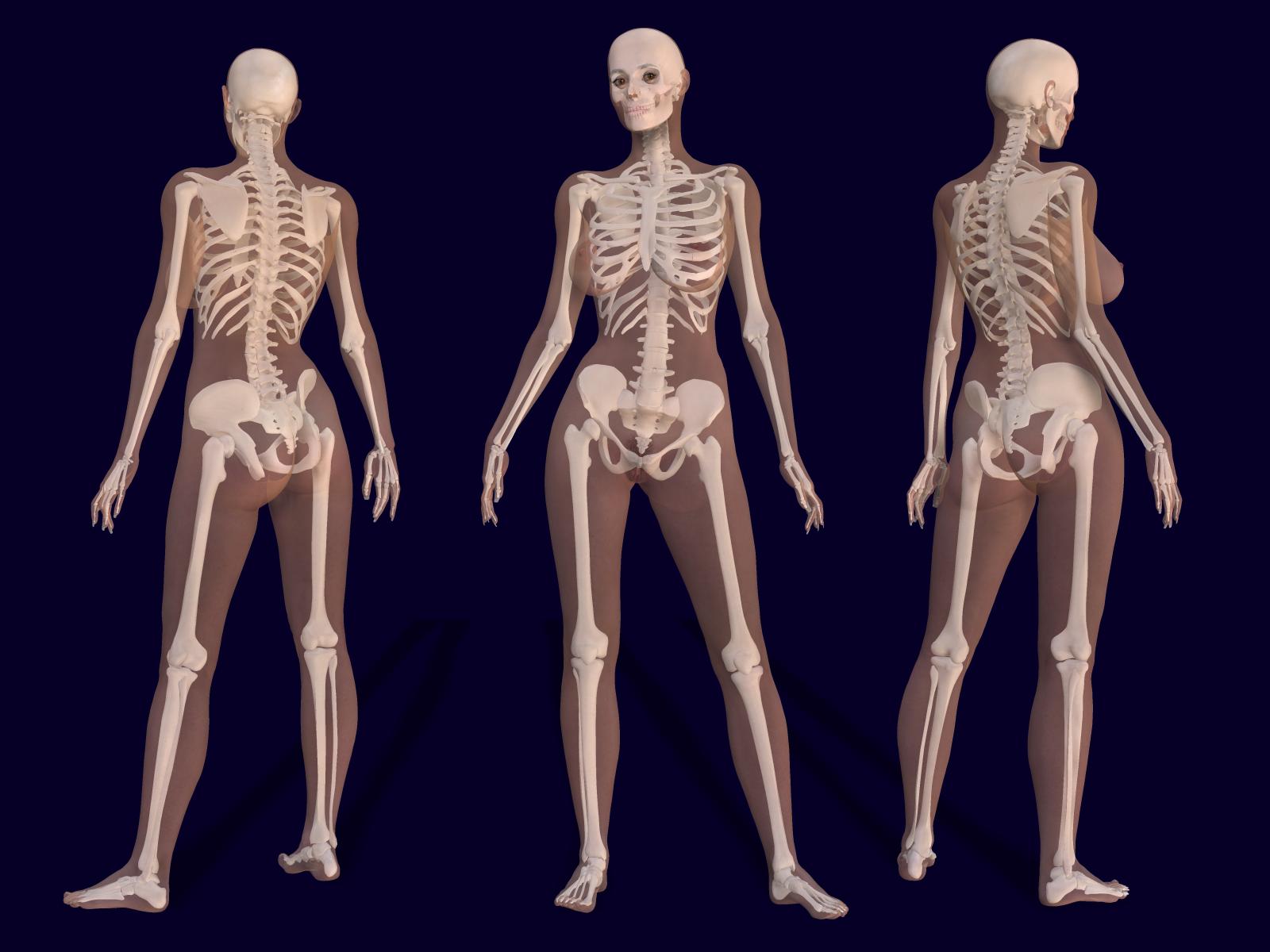 3D_Female_Skeleton_Anatomy.png