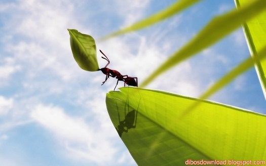 Abstract Style Ant Carrying Leaf