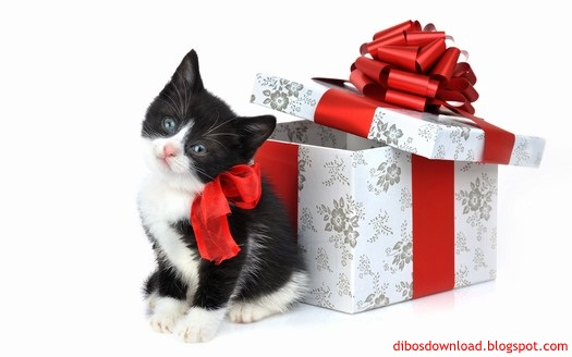 and cat gift packages