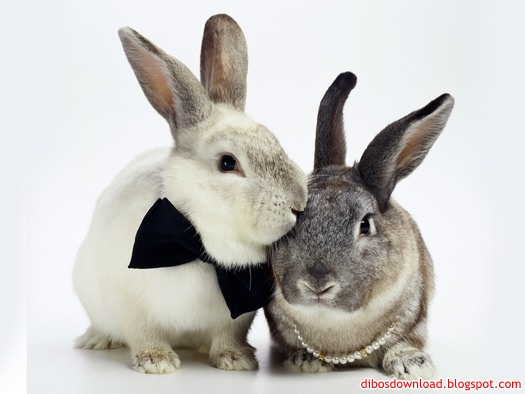 rabbit wearing a bow tie