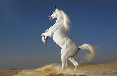 Horses-Wallpapers-Download.jpg