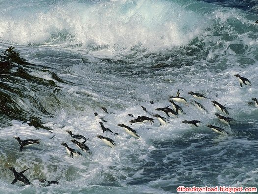 penguins in waves