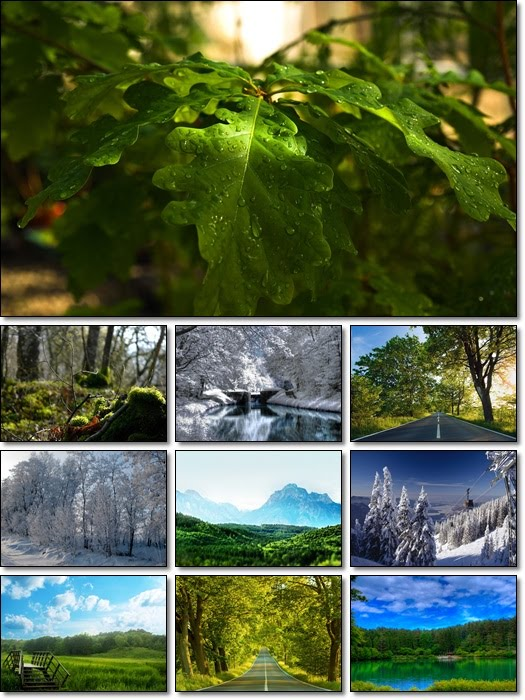 Forest Wallpapers Pack 3