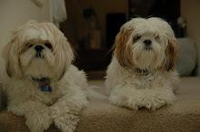 Cooper and Cody