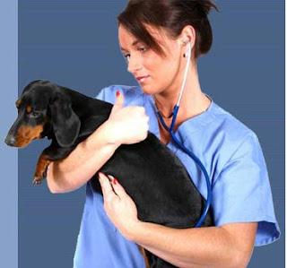 Професія ветеринар