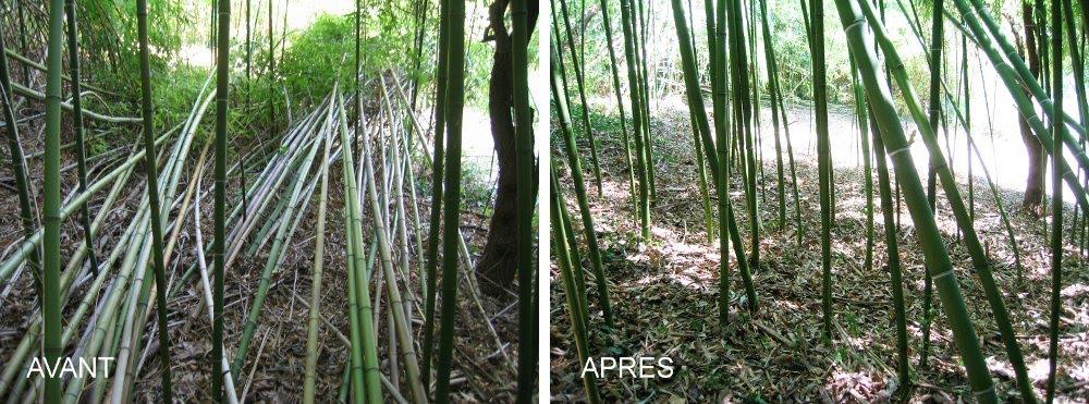 bambou38 entretien d 39 une bambouseraie avant apr s. Black Bedroom Furniture Sets. Home Design Ideas