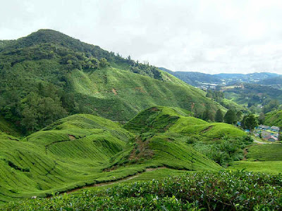 Cameron Highlands International Tour :  beach resorts hotels five star