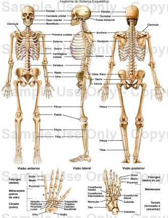 Innovaciones Metodologicas: Sistema Esqueletico