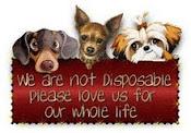 Saving Pets!