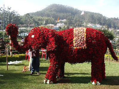 Ooty Flower Show 2010 elephant image