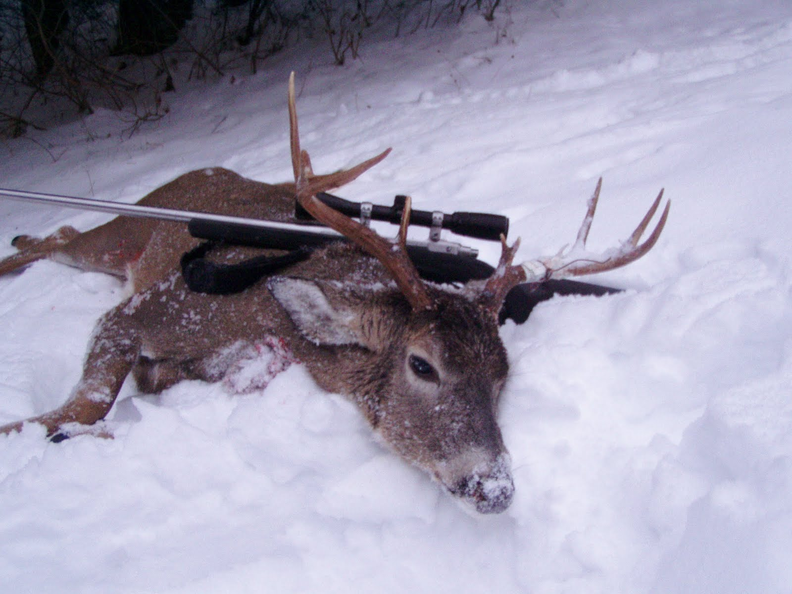 The backwoods views journal the do it yourself european mount if youve had a successful year of hunting elk or deer then here is one handsome option to consider if you want a tedious but very rewarding do it yourself solutioingenieria Image collections