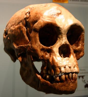 Homo Floresiensis (Ryan Somma)
