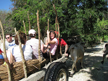 Haitian Ox Cart Ride for Jen