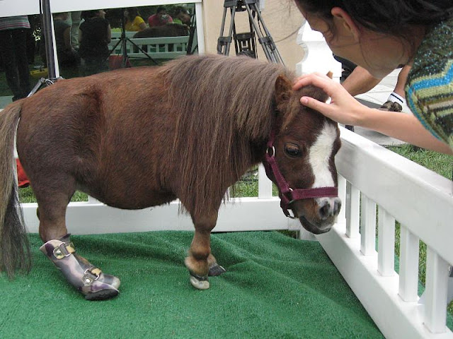 The smallest horse in the world ever - photo#1