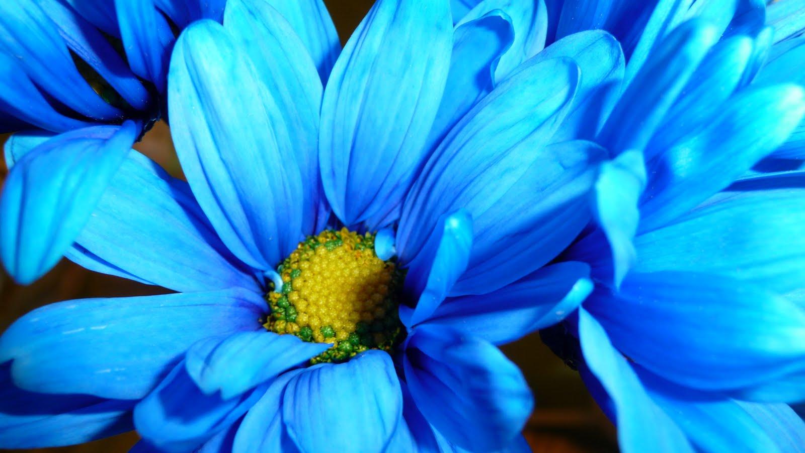 Цветы бирюзового цвета фото названия