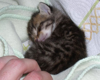 Thanks to juli mahoney for sharing her kitten pictures with us