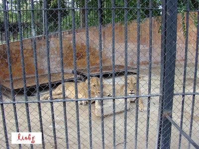 Лъвици, зоосвят Варна
