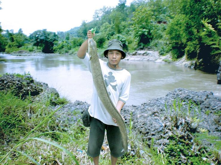 Huge Sidat /Ell Fish
