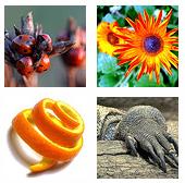 Kleine Vorschaubilder von mir geschätzter Fotografien bei Flickr.com