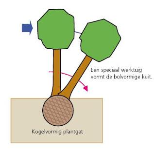 Bron: www.boomzorg.nl