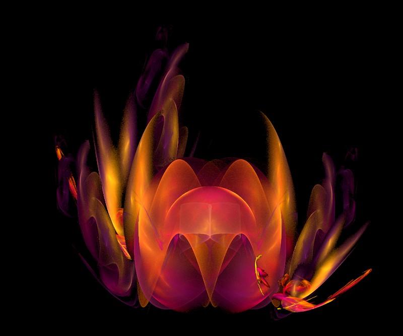 [Fractale+lotus.jpg]