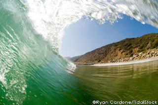 ocean water life