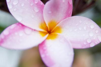 flowers Kauai
