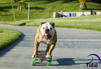 tillman skateboard