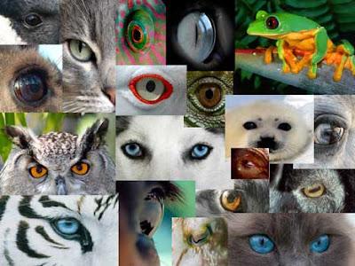 clasificacion de los animales. LA CLASIFICACIÓN DE LOS SERES