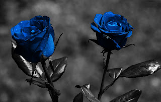 blue Roses with Black Screen