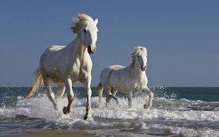 Horses Running wallpaper and photo