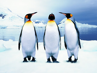 Penguins Singing wallpaper