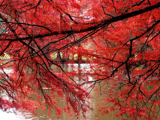 Red Branches wallpaper