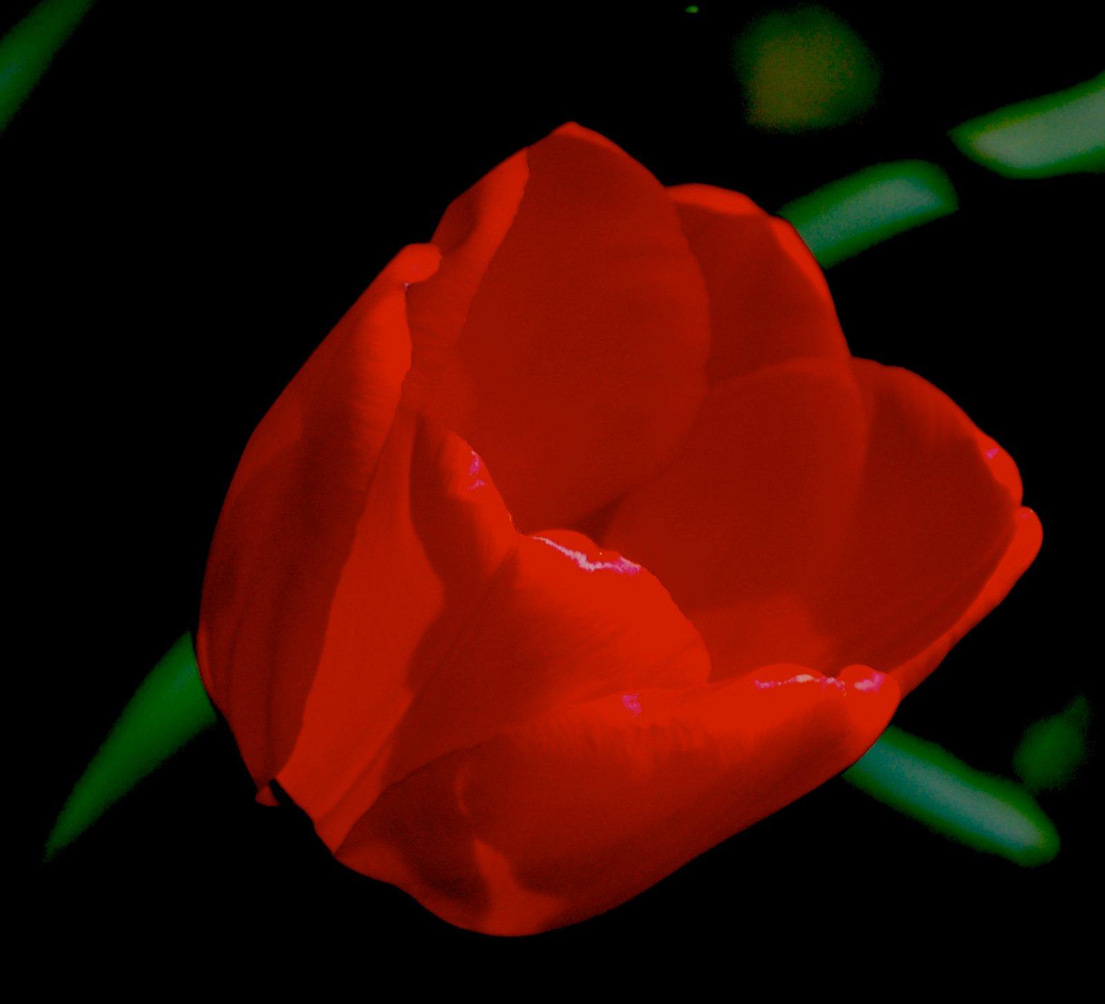 http://1.bp.blogspot.com/_Ym3du2sG3R4/TJgbO4K3O0I/AAAAAAAAC1g/BhLTDO9wlLM/s1600/Red-Rose-wallpaper.jpg