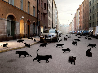 Black Cats in The Street wallpaper