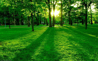Green Nature with Sunrise wallpaper