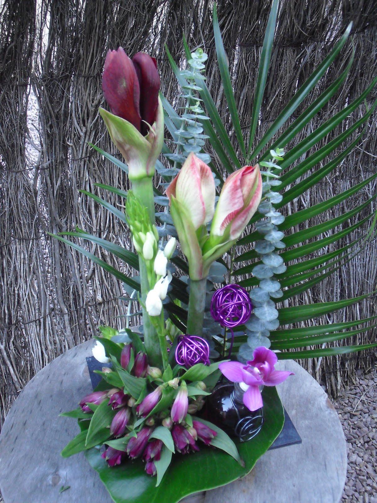 Le retour du lys fleur d 39 automne amaryllis for Les fleurs amaryllis